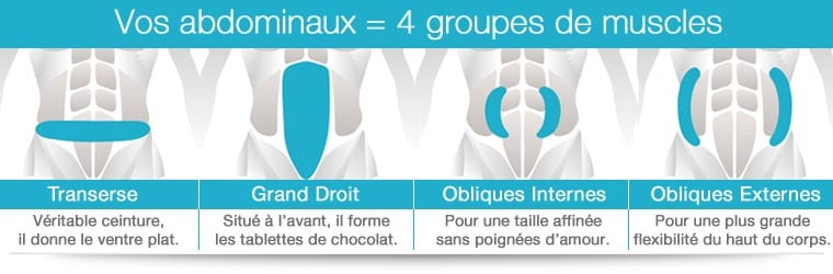 Groupes muscles abdominaux
