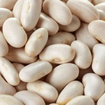 haricot-blanc