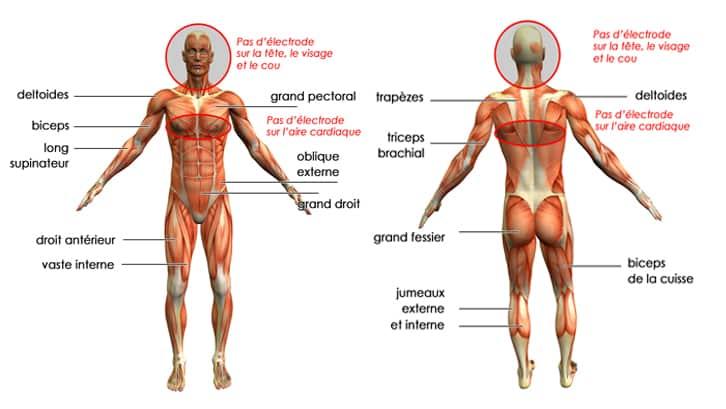 muscles-tonifier-electrostimulateur-electrique